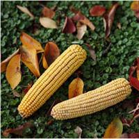 アメリカ穀物協会(USGC)様